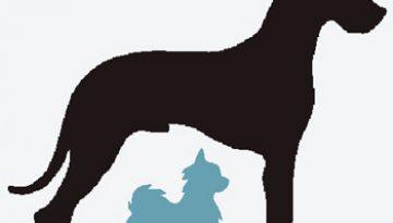 chihuahua-great-dane
