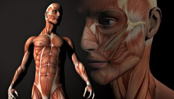 corpul-uman-capodopera-creatiei