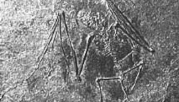 bat-fossil