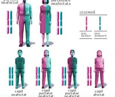 transmiterea-caracterelor-ereditare-in-descendenti