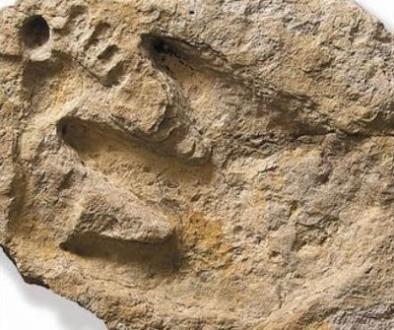 artefactul-alvis-delk
