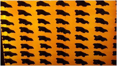 Un afiș de perete al unor cranii de lupi, iluminat din spate, la Muzeul Tarpits La Brea din Los Angeles, California. Privind cu atenție, puteți vedea că fiecare craniu este unic. Au fost multe variații ale formei acestor animale.