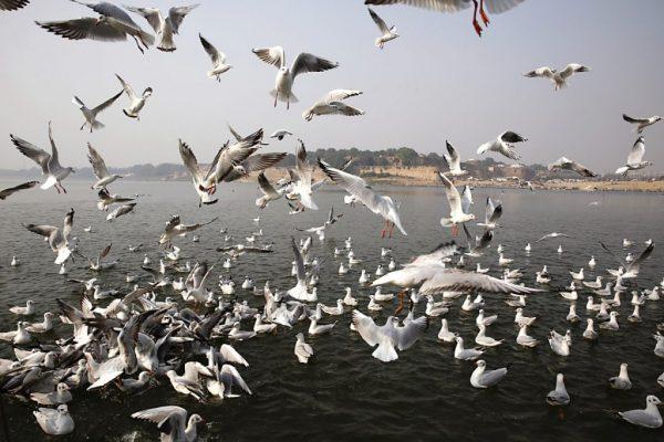 India Migratory Birds