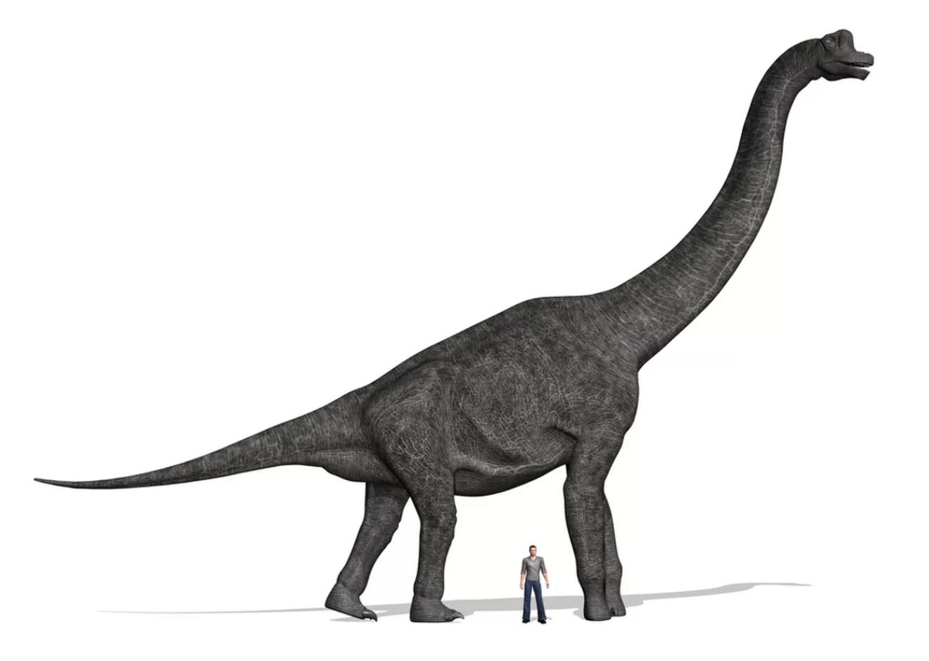 Dar reconstrucțiile Brachiosaurus-ului făcute de paleontologi, bazate pe fosile, arată foarte mult ca descrierea făcută de Dumnezeu lui behemot în cartea lui Iov.