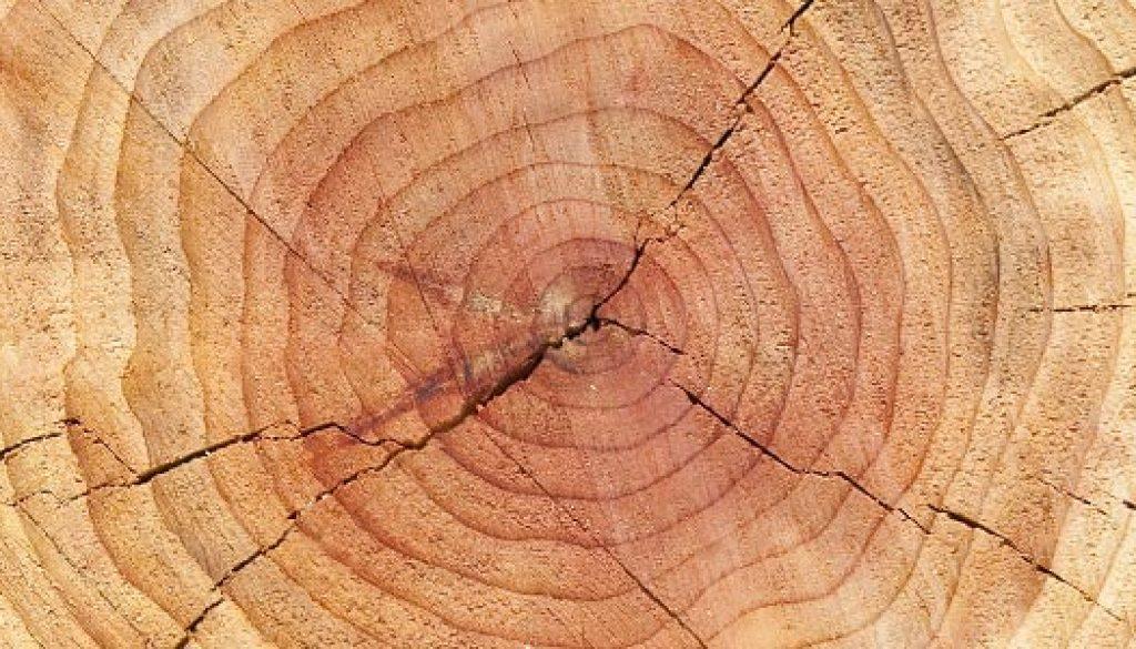 round-trees