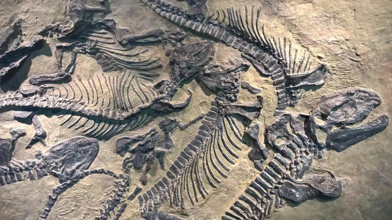 Fosile de dinozauri
