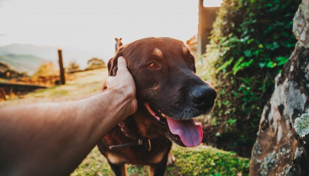 animal-canine-cute-2376996