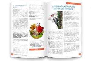 pag-12-13 copy