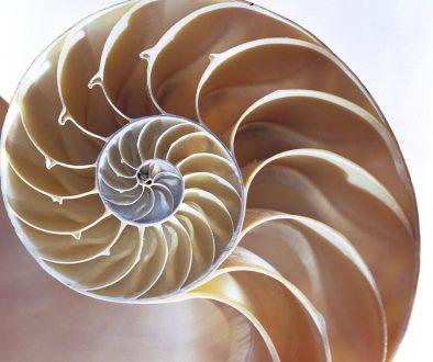 1-nautilus-shell-lawrence-lawry