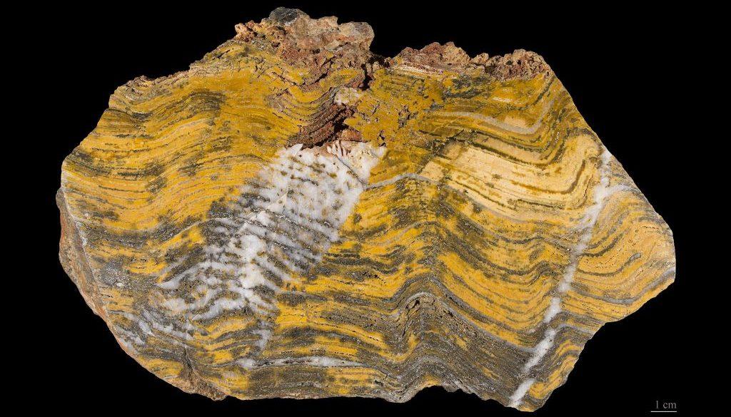 Stromatolithe - MNHT