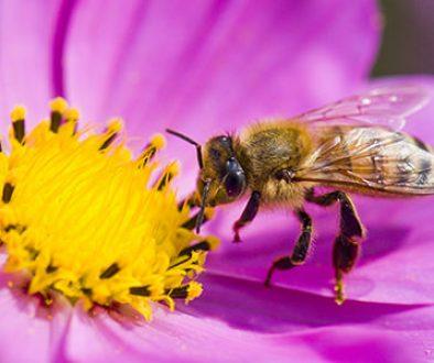 albina-floare