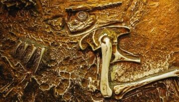 vechime-oase-dinozaur