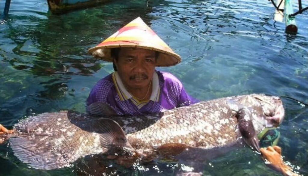cealacant-indonezia