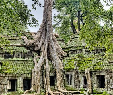 copac-crescut-pe-casa