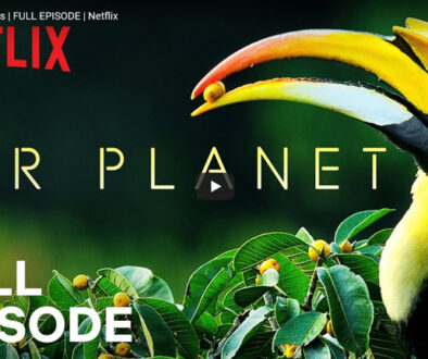 BBC-Our-Planet-Forests