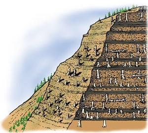 Diagramă utilizată cu permisiune din partea The Young Earth, de către John D. Morris.
