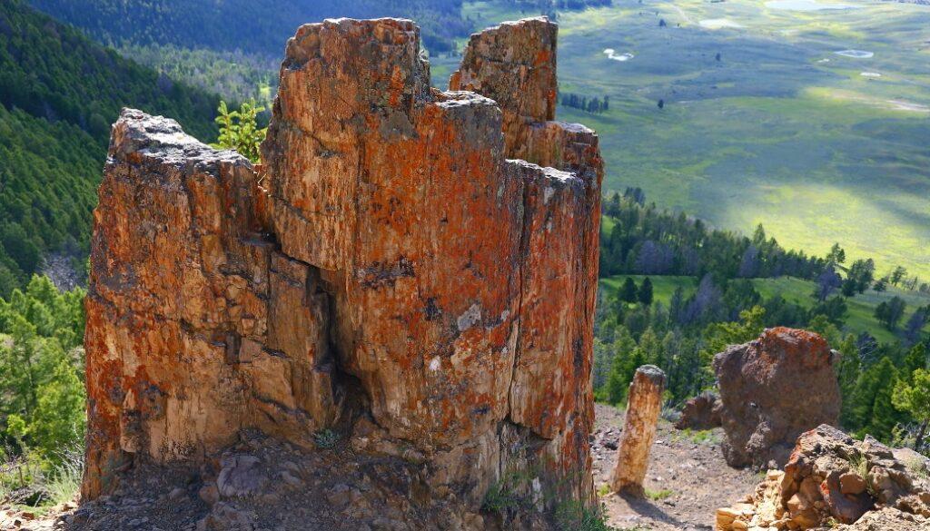 paduri-pietrificate-yellowstone5