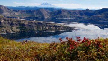 View to Mt. Adams over Spirit Lake, Harrys Ridge