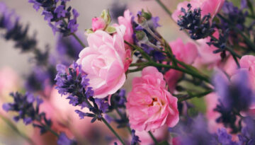lavender-5326246_1280