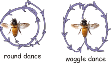 the_waggle_dance-
