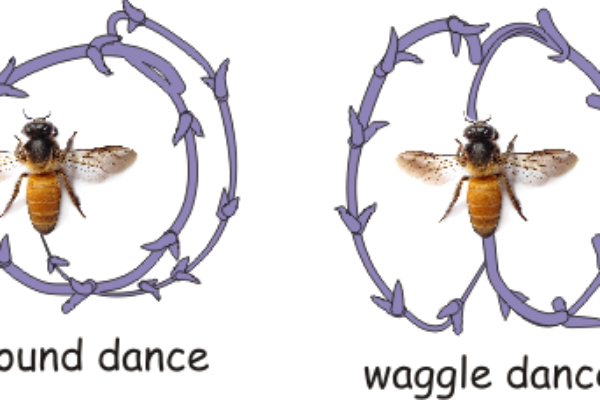 the_waggle_dance-