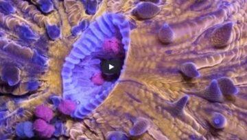 creaturi-bizare-din-ocean