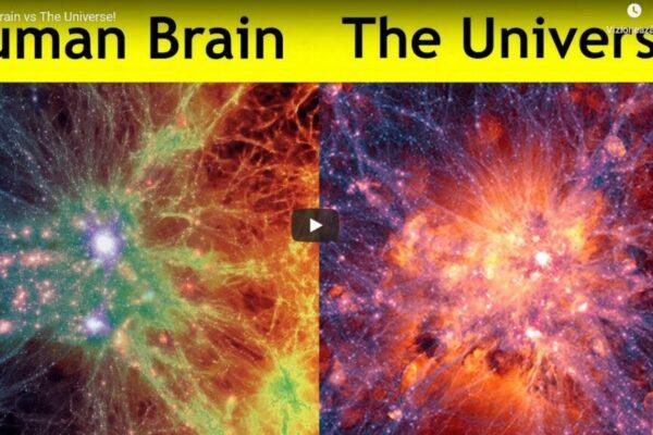 human-brain-universe