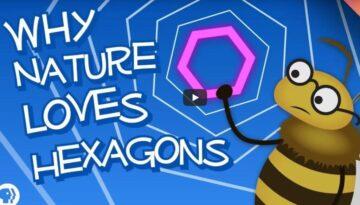 de-ce-Dumnezeu-foloseste-hexagonul-des-in-natura