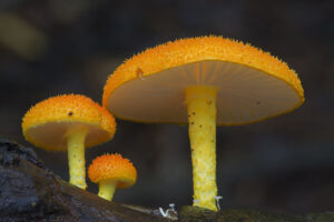 mushroom-photography-steve-axford-141