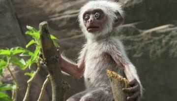 dumnezeu-empatie-maimute1