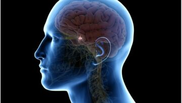 glanda-pituitara1