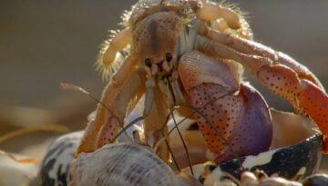 ordine-natura-crabi