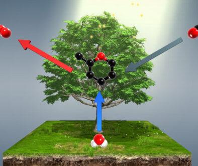 echilibrul ecologic